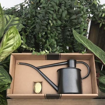 Haws Graphite Watering Can at Clifton Nurseries