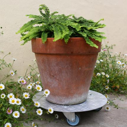 Clifton Nurseries Plant Trolley