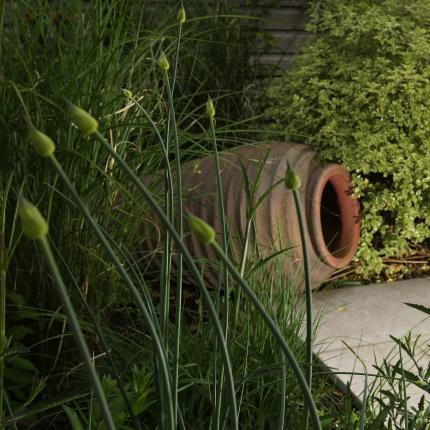 Clifton Nurseries - Pot Company Old Ironstone Tall Jar