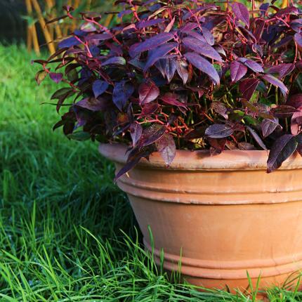 Clifton Nurseries pot company planter terracini lucretia 55cm