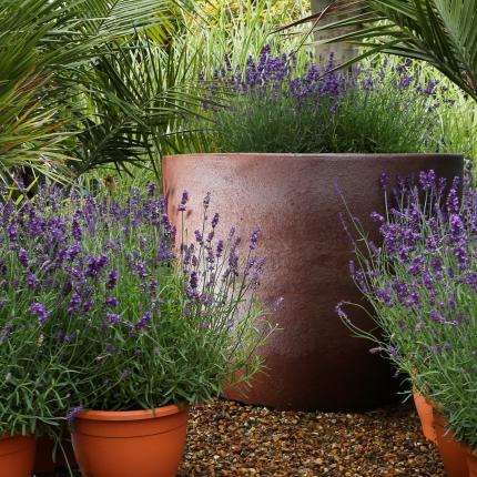 Clifton Nurseries - Pot Company Ironstone Toscano Pot