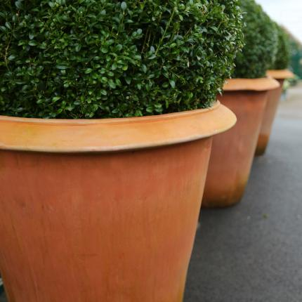 Clifton Nurseries Terracini Camellia Pot
