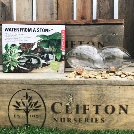Clifton Nurseries Water From A Stone