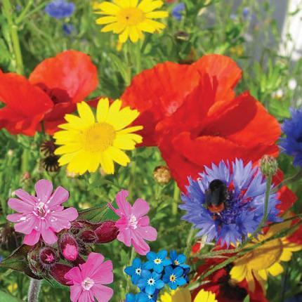 Clifton Nurseries Wildflower Seedbom