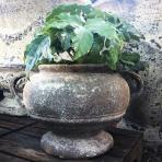 Clifton Nurseries Chalice Urn in Salvage
