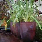Clifton Nurseries pot company ironstone reus planter 50cm