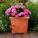 Clifton Nurseries Pot Company Terracino Bay Tree Square Planter