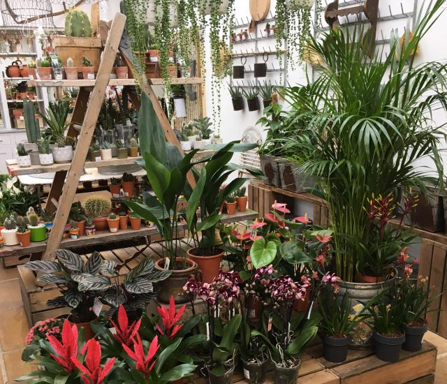 Garden Vintage Popup Shop Clifton Nurseries