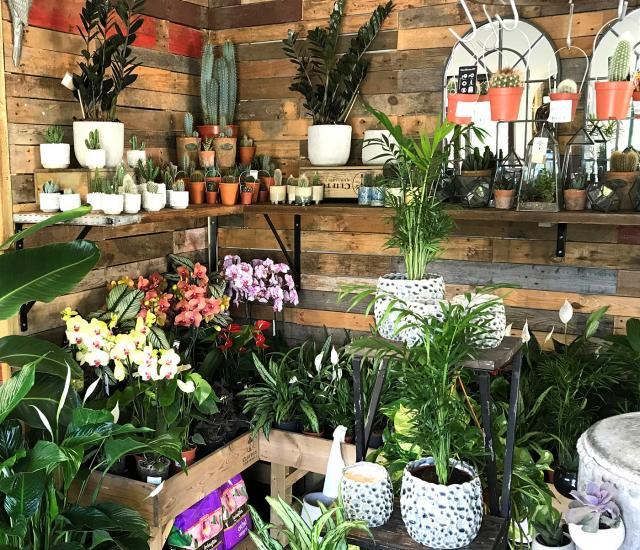 Clifton Nurseries Surrey Gift Shop