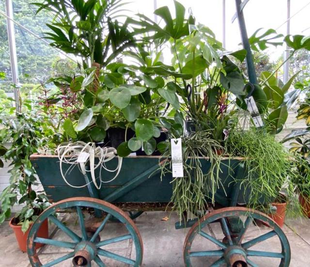 Clifton Nurseries Houseplants