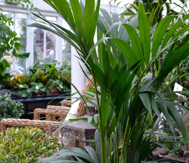 Job Vacancy - Retail Assistant, Indoor Plants at Clifton London