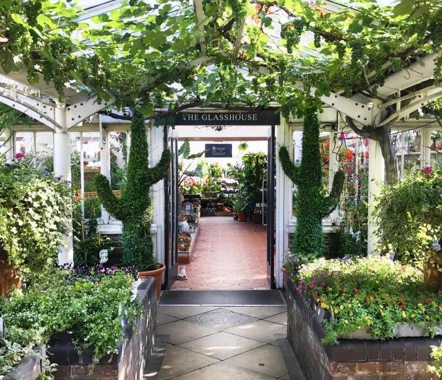 Clifton Nurseries - inspiring gardeners for 170 years