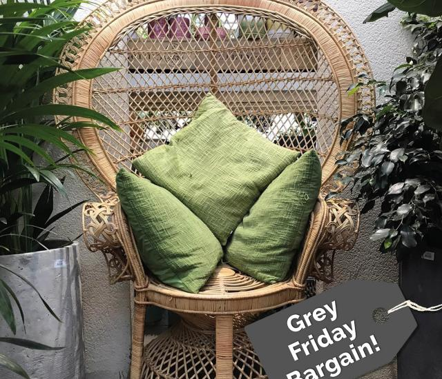 Grey Friday bargains from Clifton Nurseries