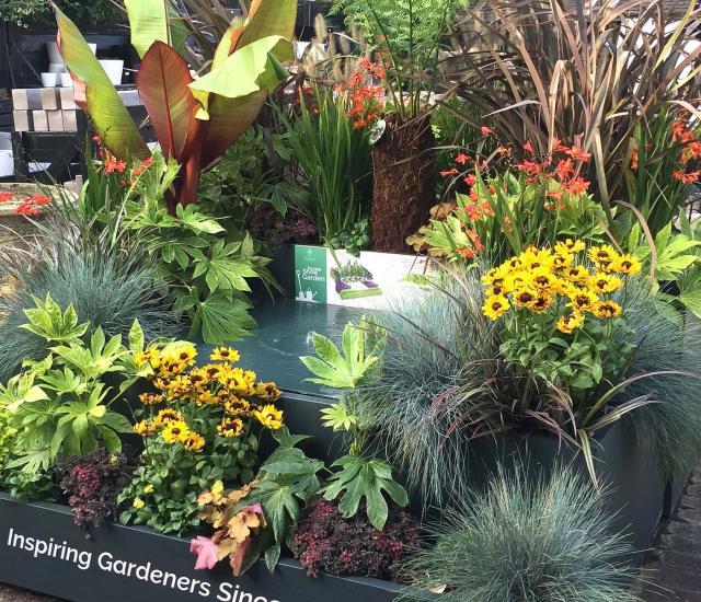 Clifton Nurseries Tropical Pocket Garden