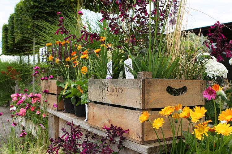 Clifton Nurseries Surrey Plants and Products