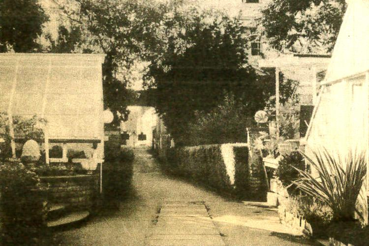 Clifton Nurseries History Sydney Cohen