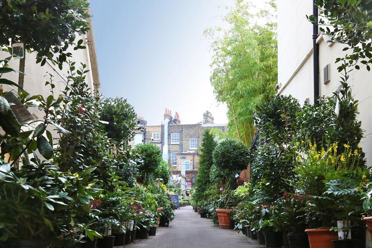 Clifton Nurseries London Hidden Oasis
