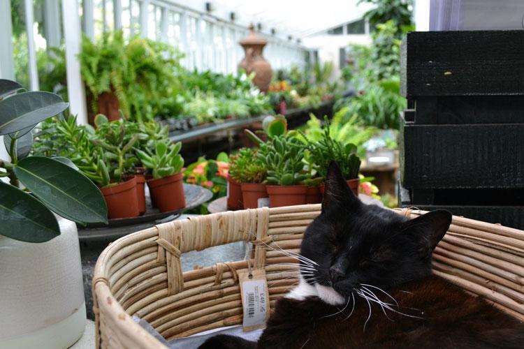 Clifton Nurseries London Houseplants Glasshouse