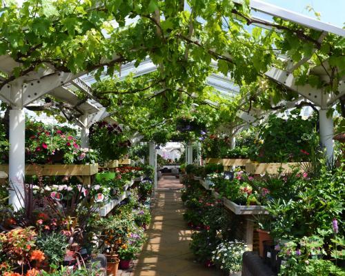 Clifton Nurseries London - an idyllic hidden oasis