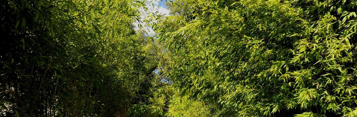 Clifton Nurseries bamboo root barrier