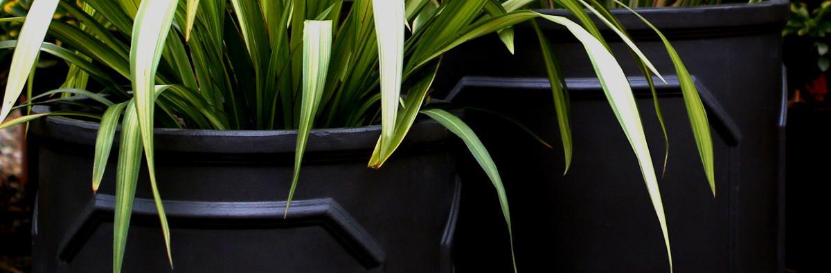 Clifton nurseries Clayfibre Chelsea Cylinder 45cm 55cm garden pots