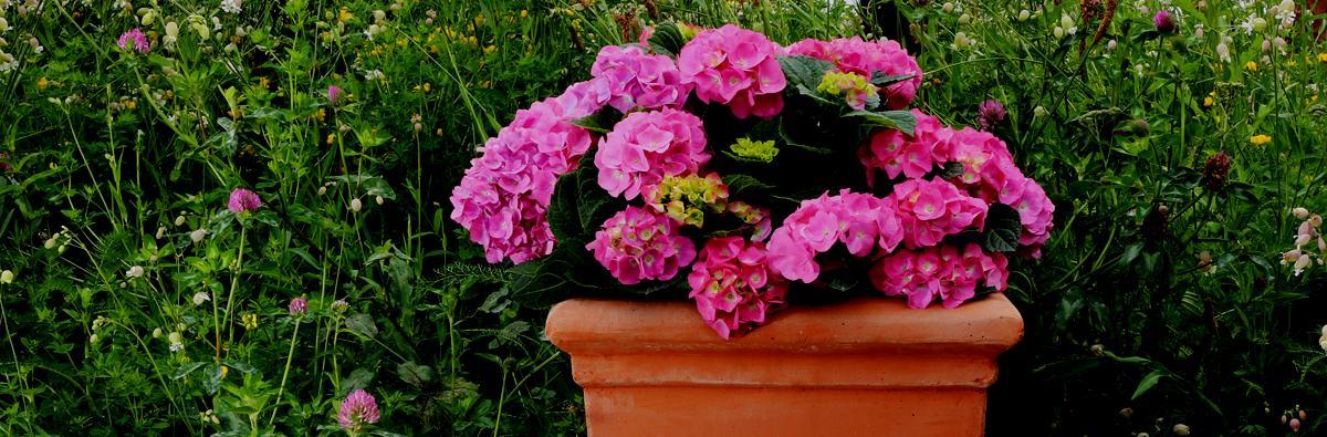 Clifton Nurseries Pot Company Terracino Bay Tree Square Planter - Banner