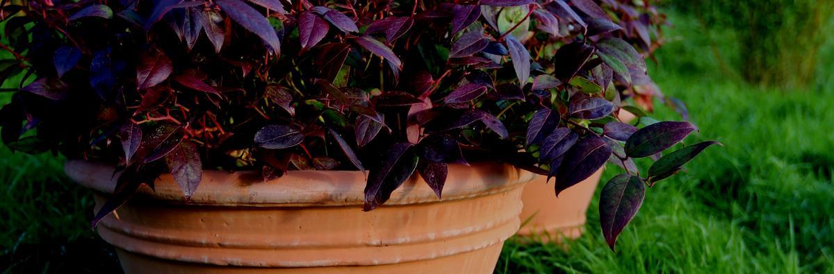 Clifton Nurseries pot company planter terracino lucretia 55cm