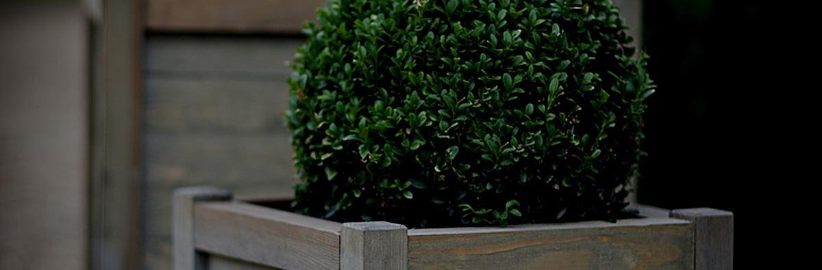 Clifton Nurseries Wooden Planters