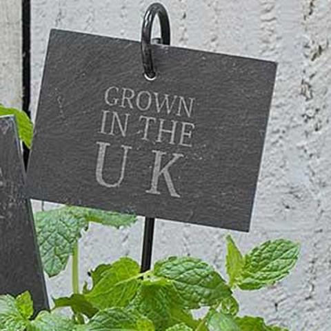 Clifton Nurseries Slate Plant Tag