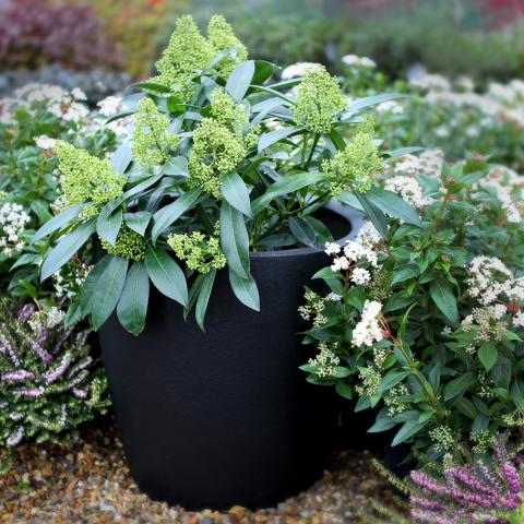 Clifton Nurseries living green cirkik 42cm textured black