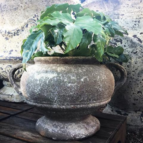 Clifton Nurseries Chalice Urn in Salvage