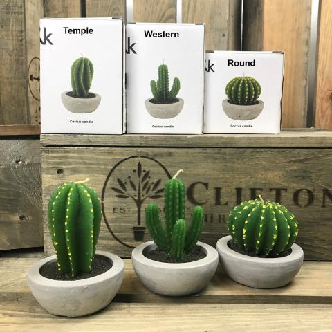 Clifton Nurseries Cactus Candle