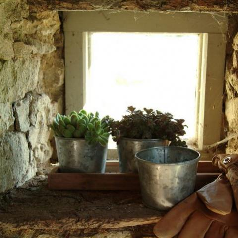 Clifton Nurseries Galvanised Pot