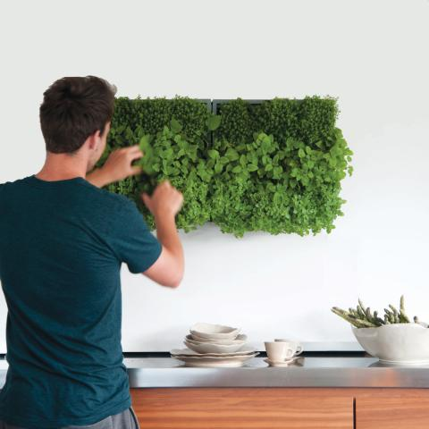 Clifton Nurseries Karoo Indoor and Outdoor Green Wall