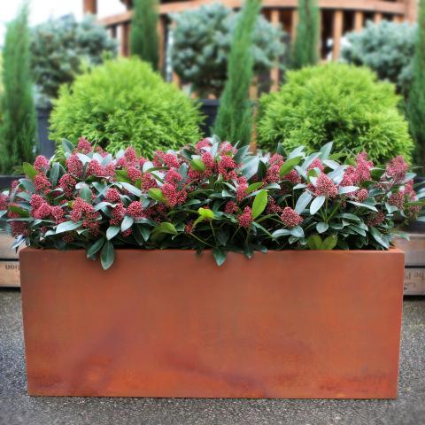 Clifton Nurseries living green barrier outdoor planter rust