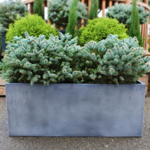 Clifton Nurseries living green outdoor barrier planter grey aged lead
