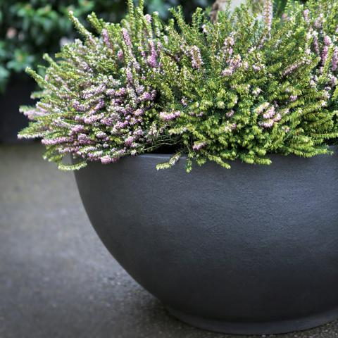 Clifton Nurseries living green bodacia planter graphite grey metallic textured bowl