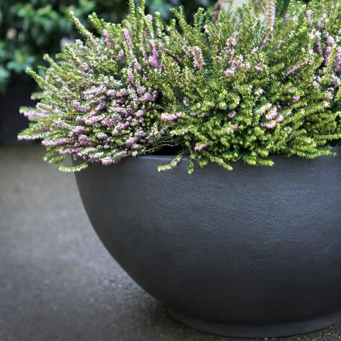 Clifton Nurseries living green bodacia planter graphite grey metallic textured bowl