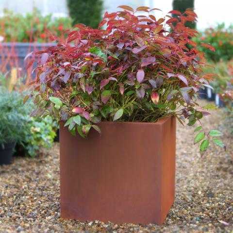 Clifton Nurseries living green cube outdoor planter natural rust