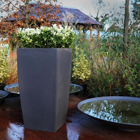 pots containers clifton nurseries. Black Bedroom Furniture Sets. Home Design Ideas