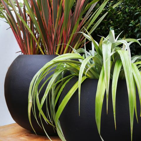 Clifton Nurseries living green planter sphere textured jet black