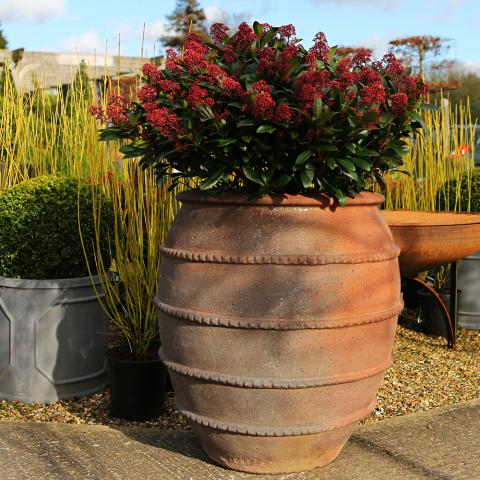 Clifton Nurseries PC Old Ironstone Old Urn - 70cm