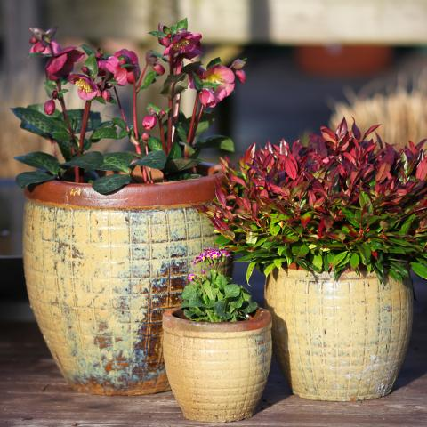 clifton nurseries yakuta water jar fuzhou yellow 28cm 41cm 51cm garden pots