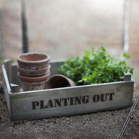 Clifton Nurseries Planting Out Box