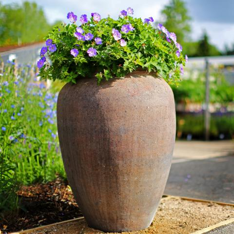 Clifton Nurseries Old Ironstone Largo Planter 68cm