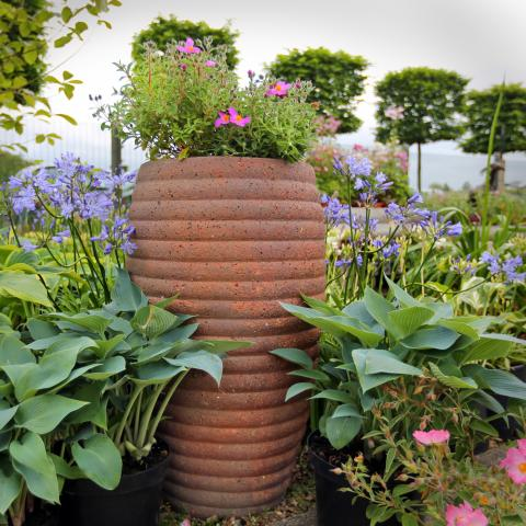 Clifton Nurseries - Pot Company Old Ironstone Old Jar