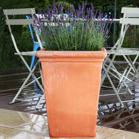 Clifton Nurseries Pot Company Terracino Square Camellia Pot