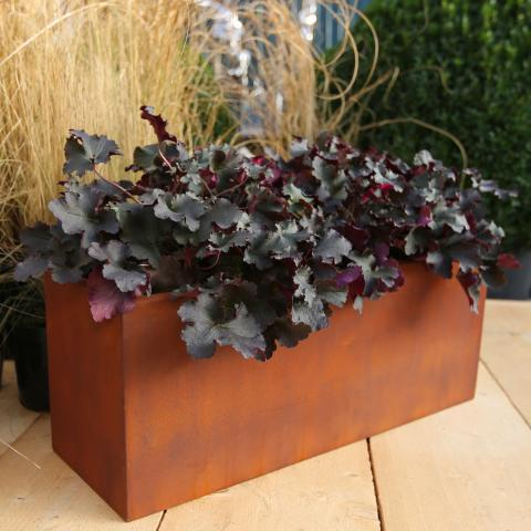 Clifton Nurseries living green window box rust 60cm