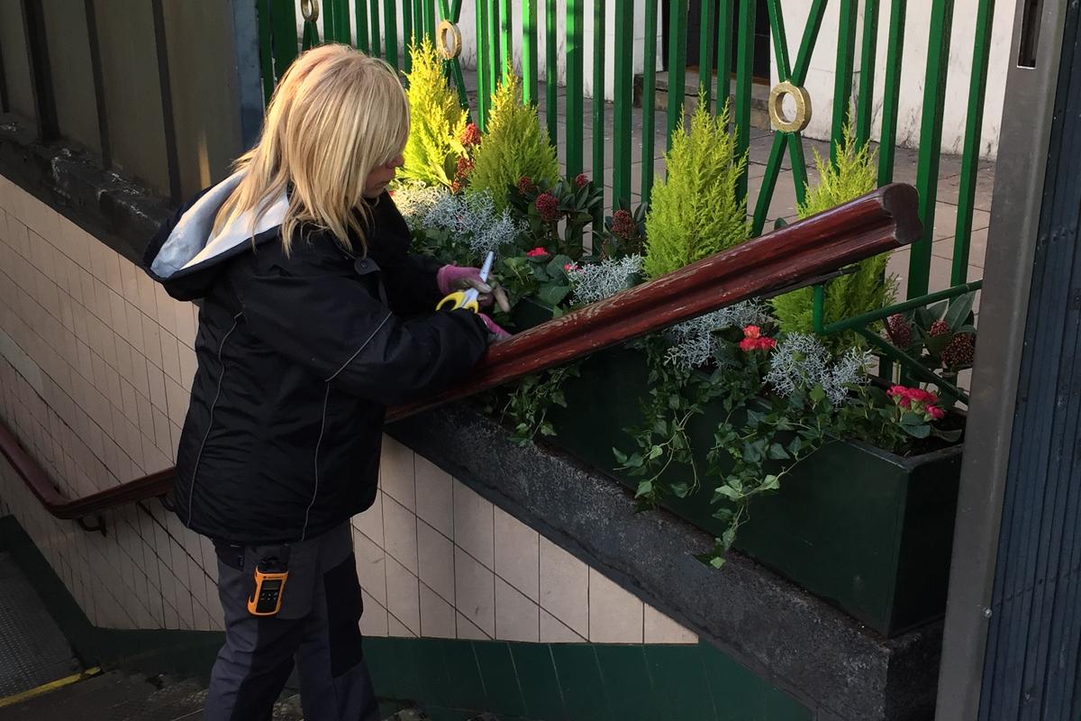 Planting up a Seasonal Winter Display